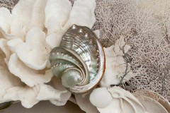 Shell Details